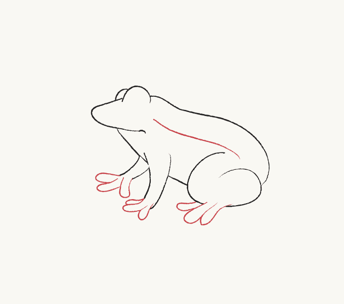 How to Draw Frog: Step 5