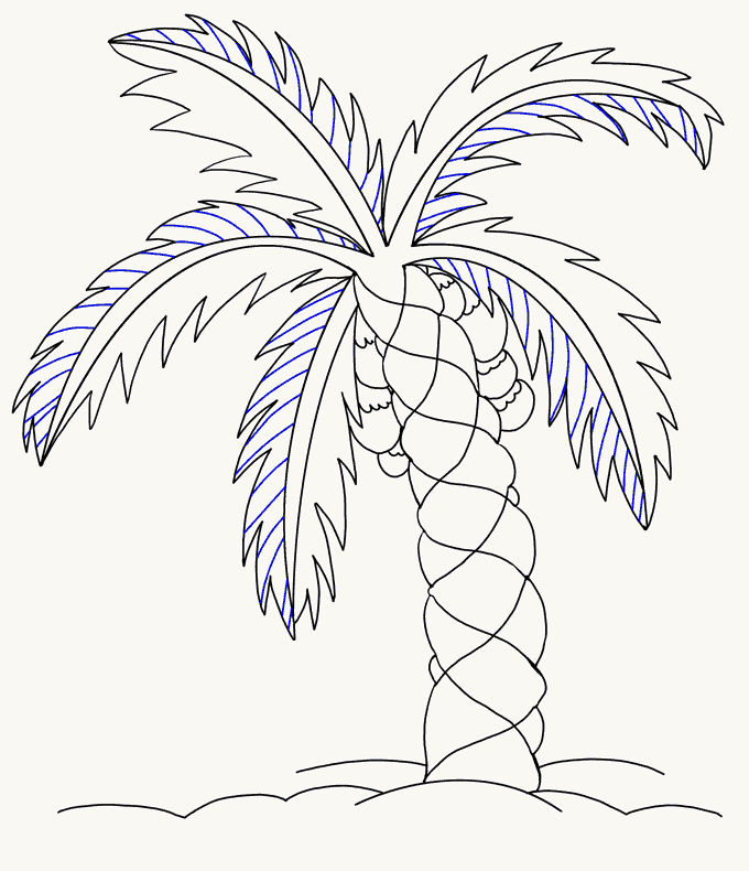 How to Draw Palm Tree: Step 16