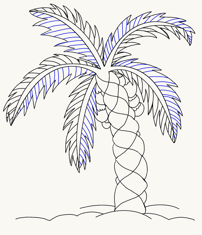 How to Draw Palm Tree: Step 17