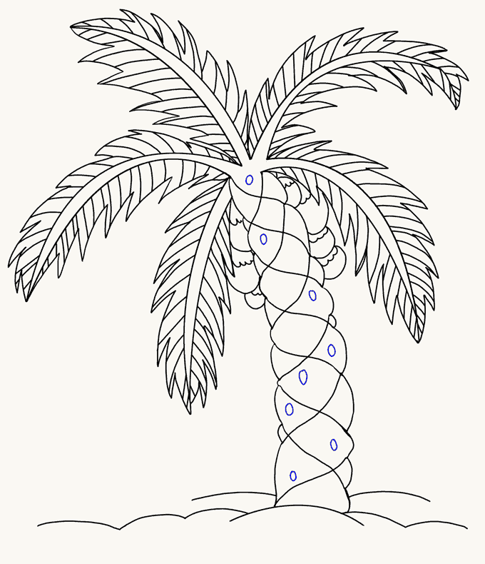 How to Draw Palm Tree: Step 18