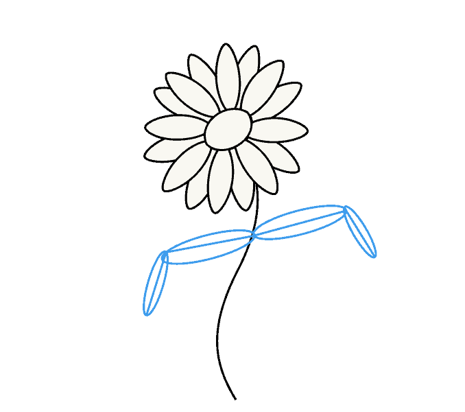 How to Draw Daisy Flower: Step 6