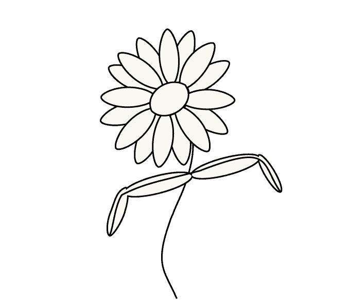 How to Draw Daisy Flower: Step 7