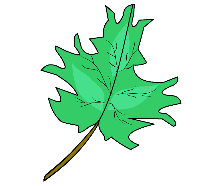 How to Draw Maple Leaf: Step 10