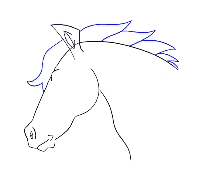How to draw a horse head Step: 16