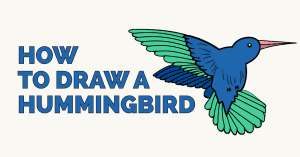 How to Draw a Hummingbird: Featured image