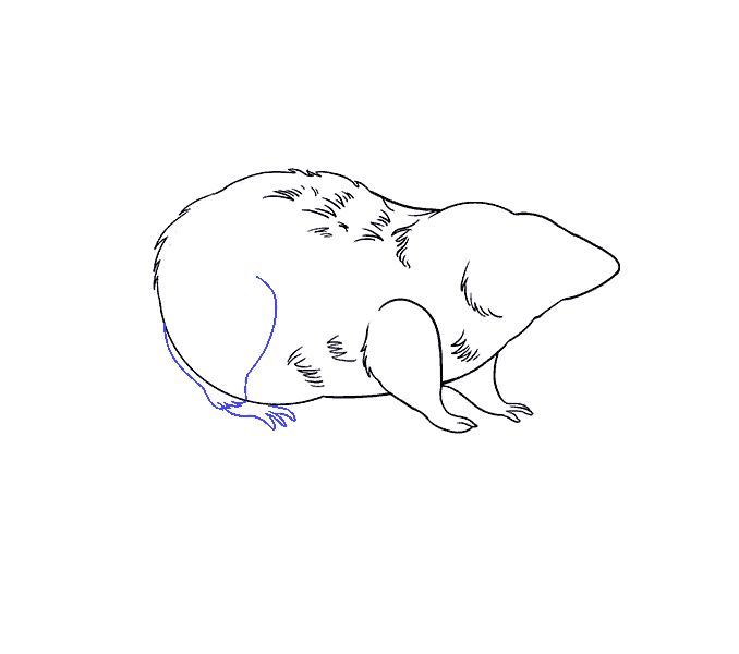 How to Draw Rat: Step 13