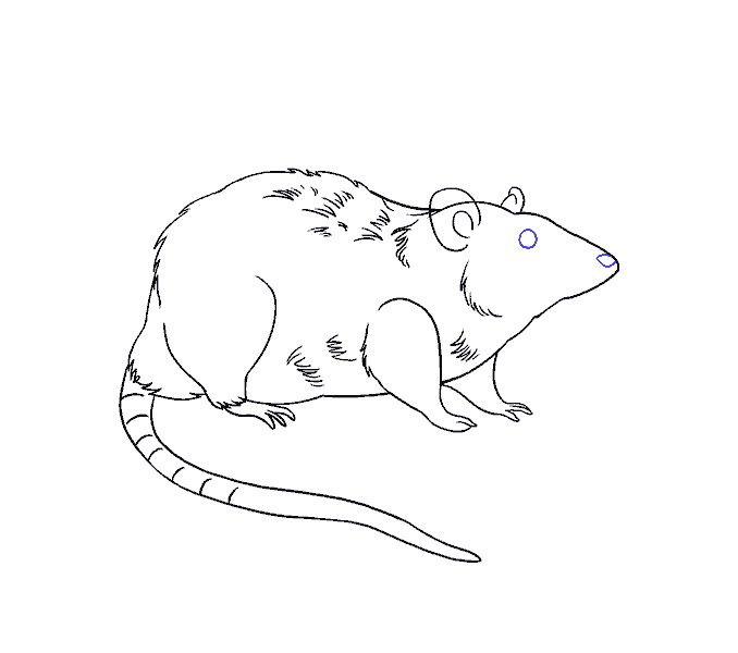 How to draw a rat Step: 18