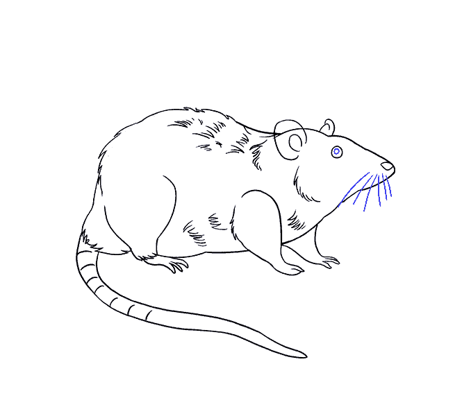 How to Draw Rat: Step 19