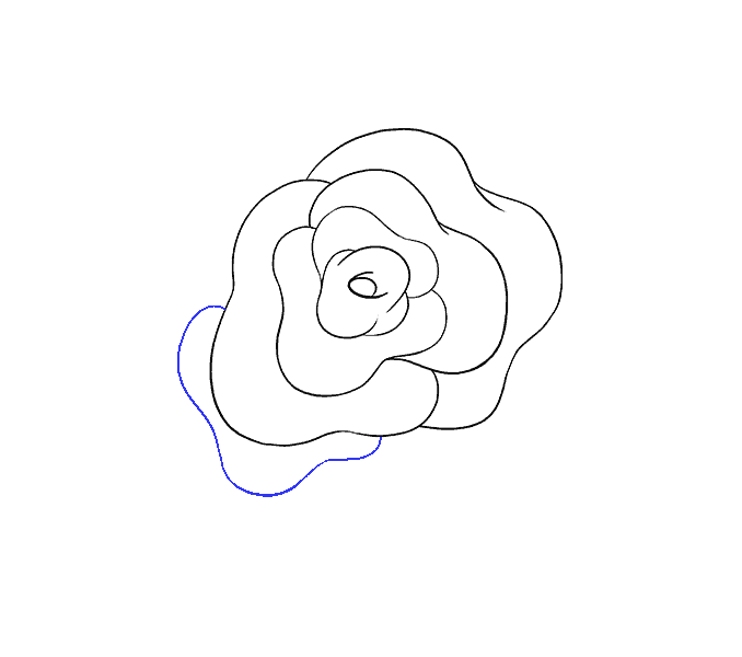How to Draw Rose Flower: Step 8