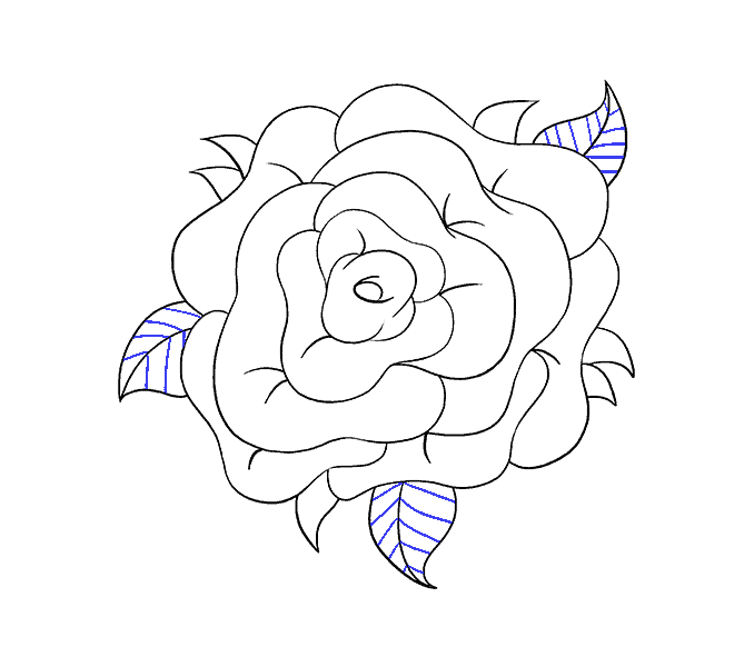 How to Draw Rose Flower: Step 19