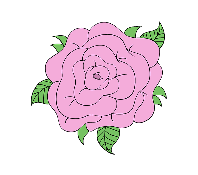 How to Draw Rose Flower: Step 20