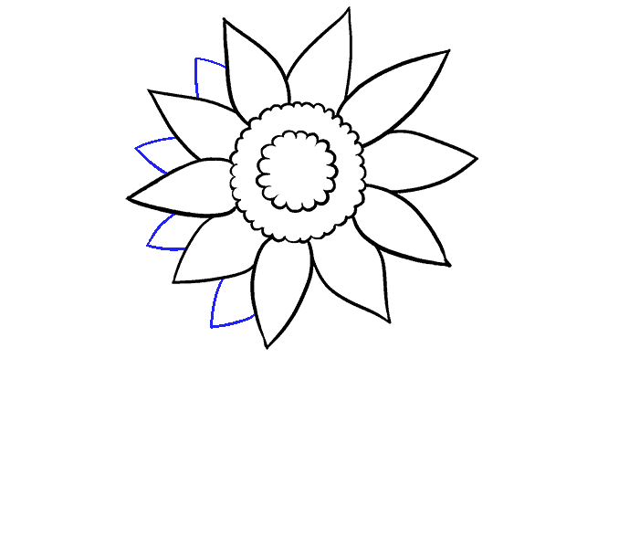 How to Draw Sunflower: Step 5