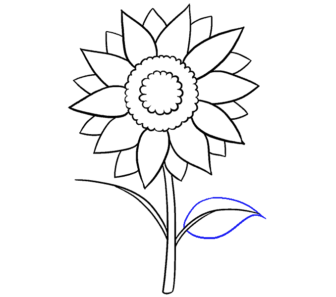 How to Draw Sunflower: Step 11