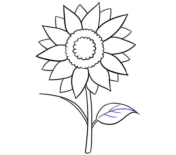 How to Draw Sunflower: Step 13
