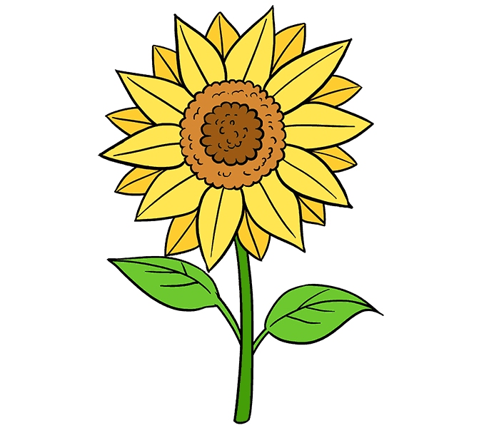 How to Draw Sunflower: Step 20