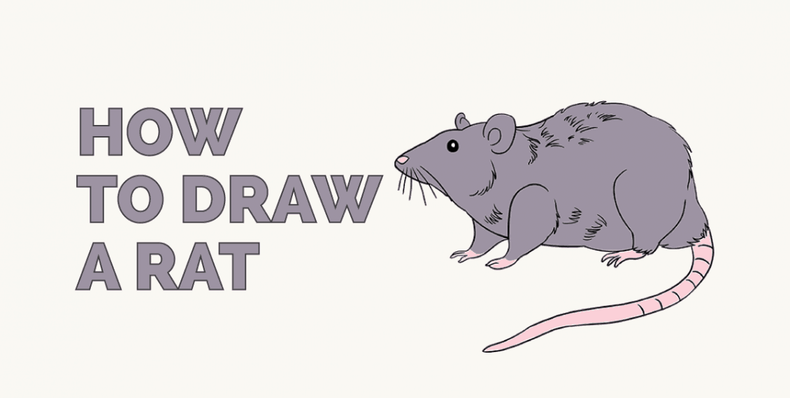 How to Draw a Rat: Featured Image