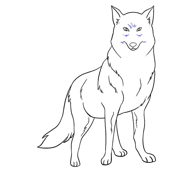 How to Draw Wolf: Step 19