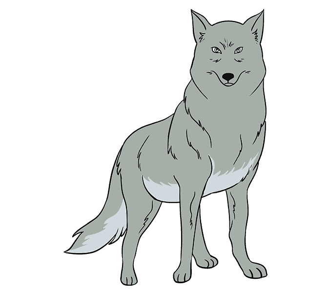 How to Draw Wolf: Step 20