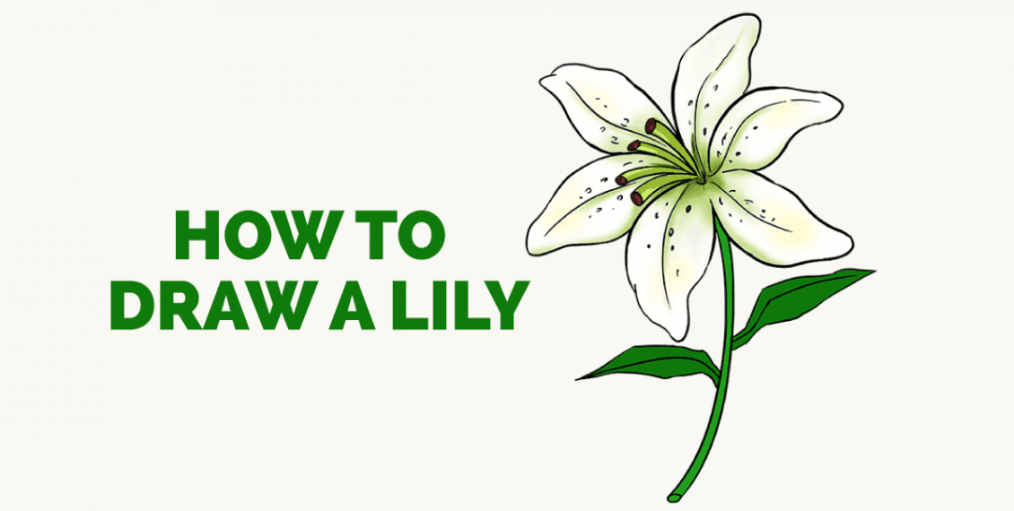 How to Draw a Lily: Featured Image