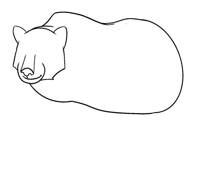 How to Draw Bear: Step 12