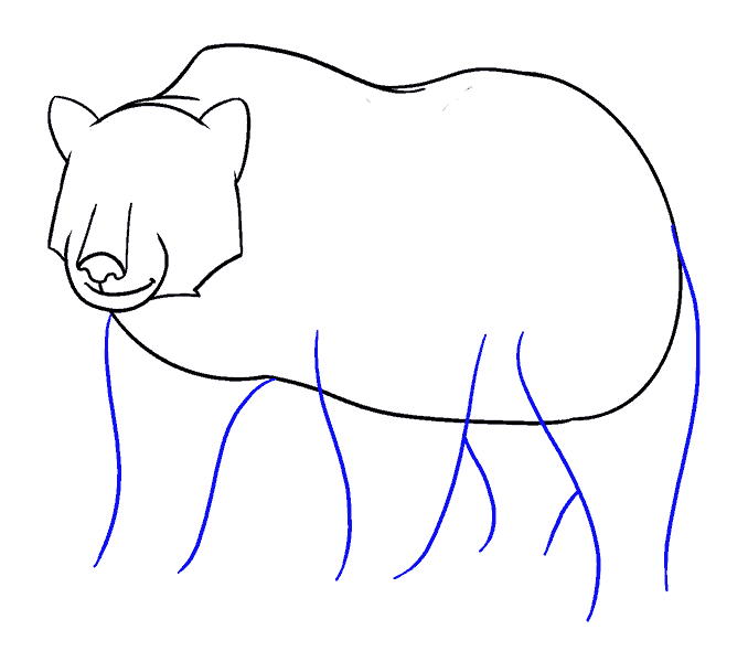 How to Draw Bear: Step 13