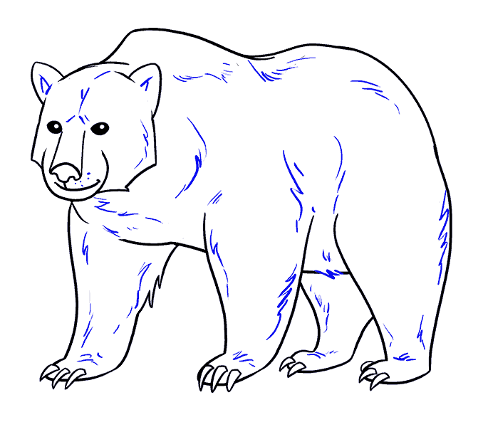 How to Draw Bear: Step 19