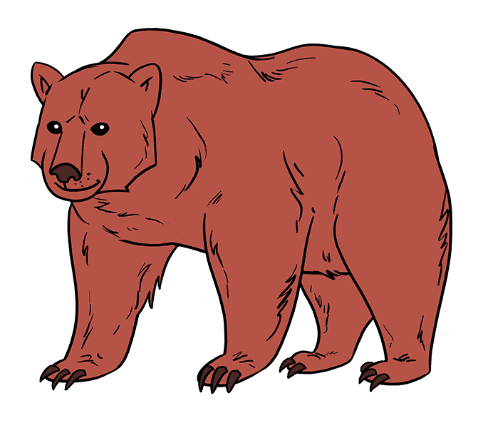 How to Draw Bear: Step 20