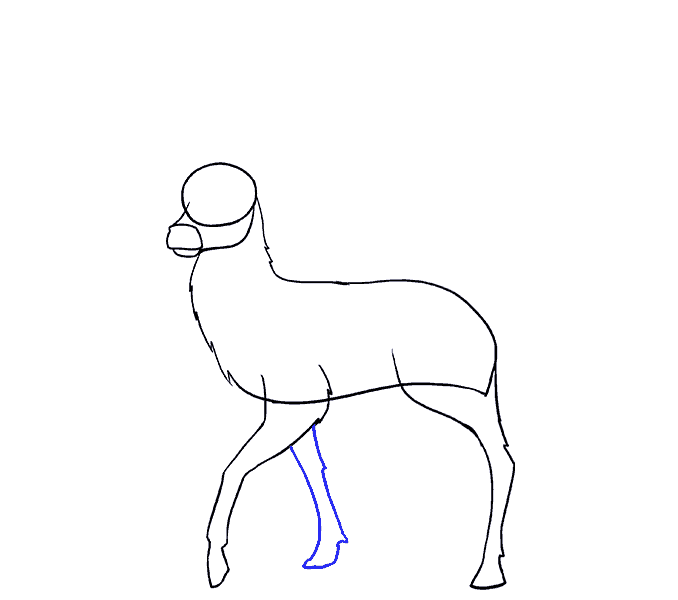 How to Draw Deer: Step 8