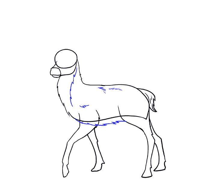How to Draw Deer: Step 11