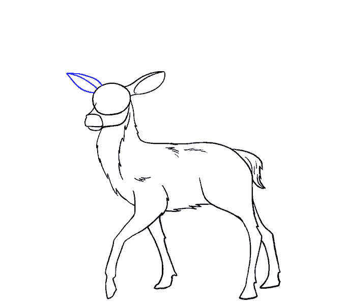 How to Draw Deer: Step 14