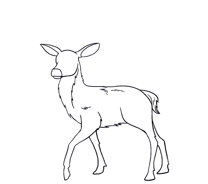 How to Draw Deer: Step 15