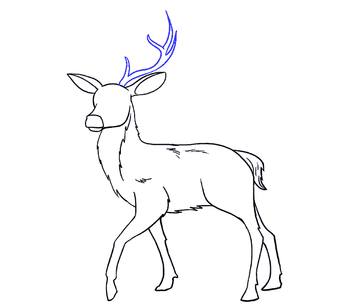 How to Draw Deer: Step 16