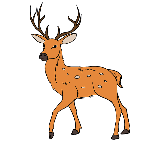 How to Draw Deer: Step 20