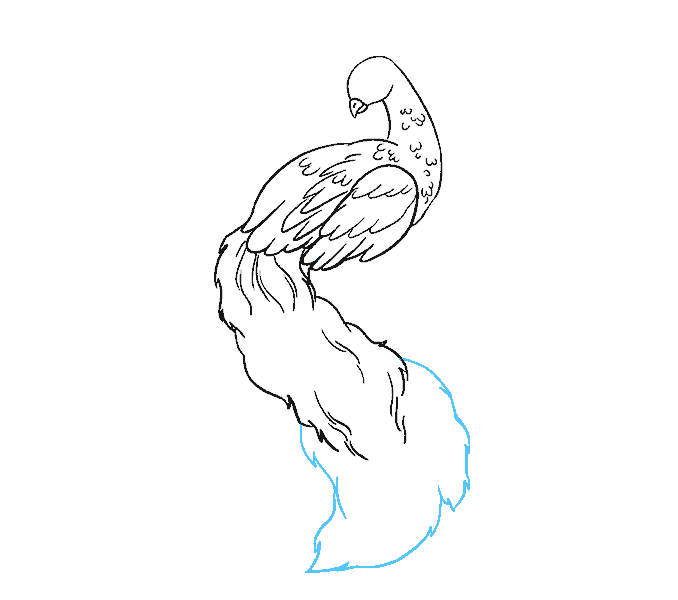 How to Draw Peacock: Step 10
