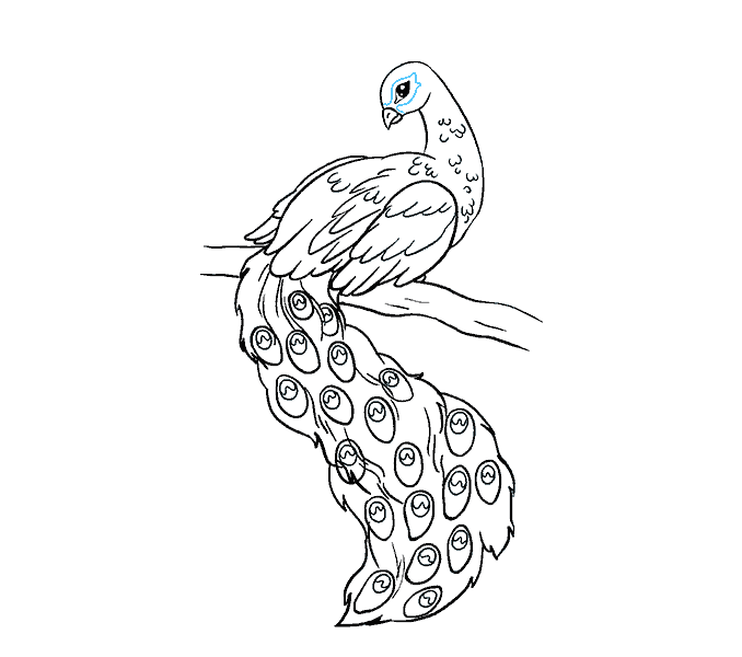 How to Draw Peacock: Step 18