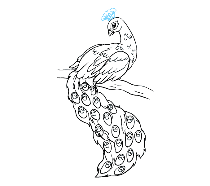 How to Draw Peacock: Step 19