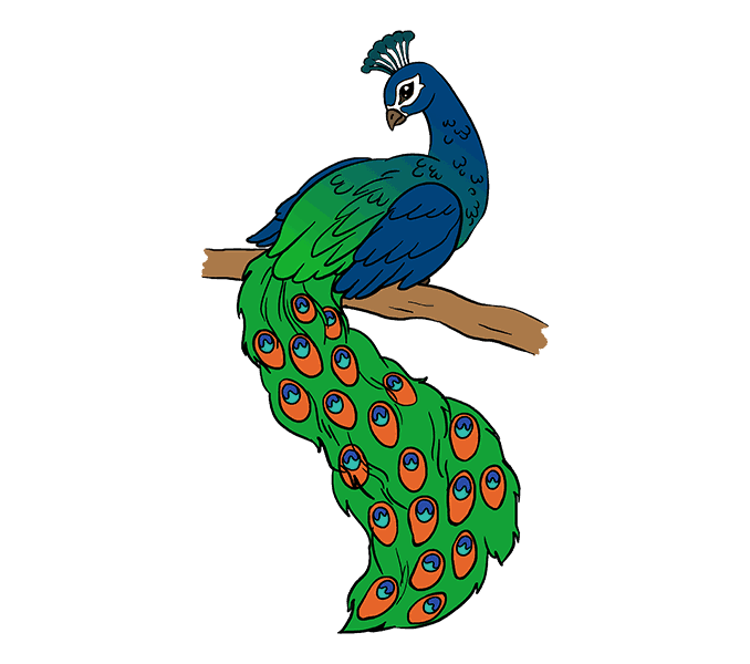 How to Draw Peacock: Step 20