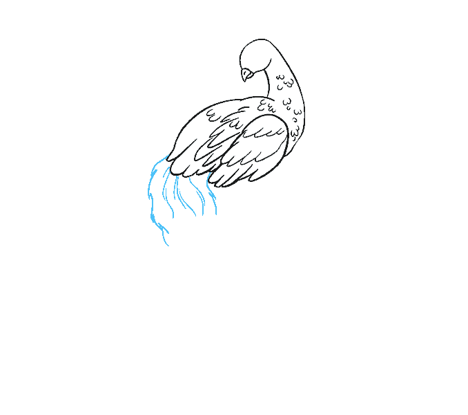 How to Draw Peacock: Step 8