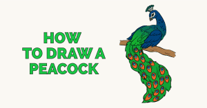 How to Draw a Peacock: Featured image