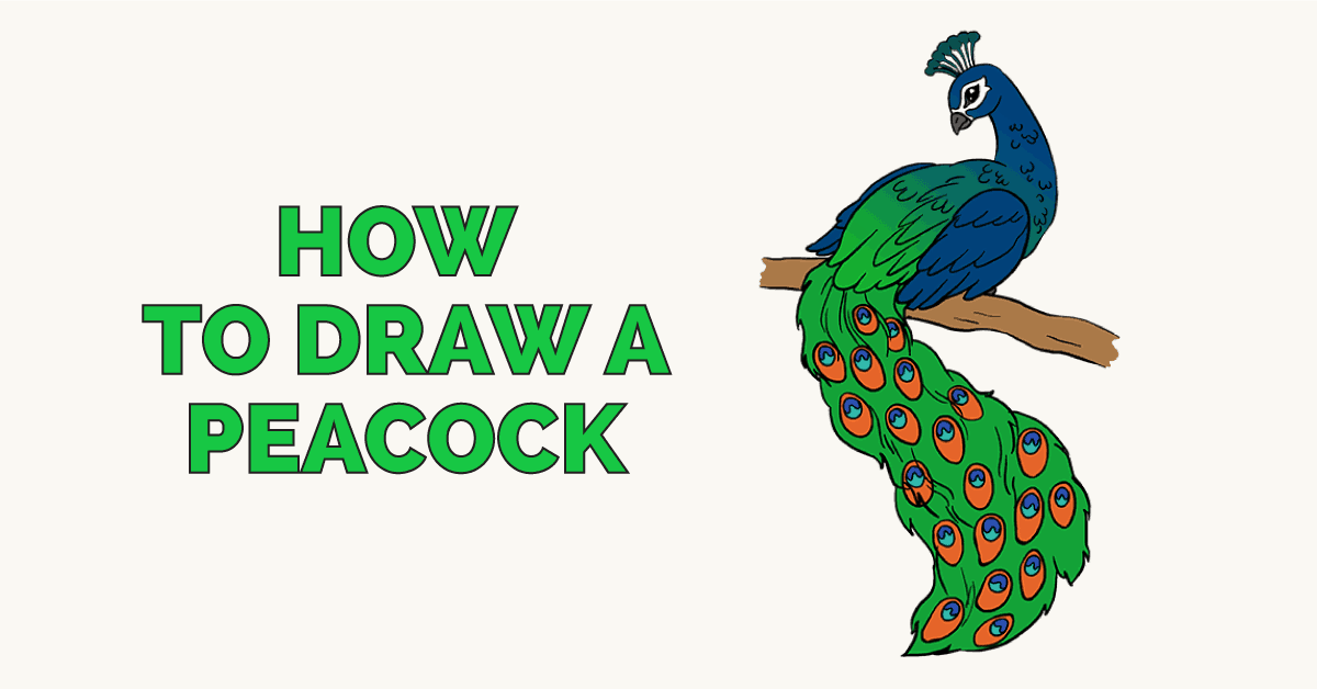 How To Draw A Peacock In A Few Easy Steps Easy Drawing Guides