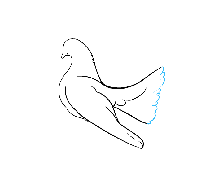 How to draw a dove Step: 10