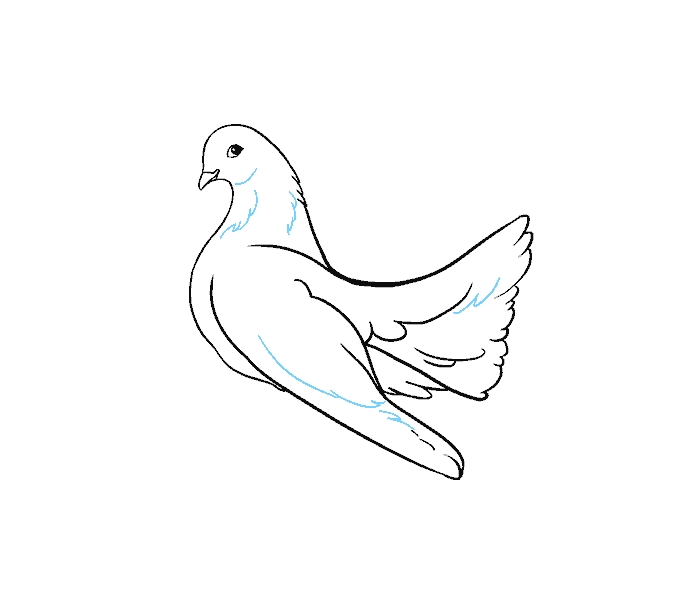 How to draw a dove Step: 13
