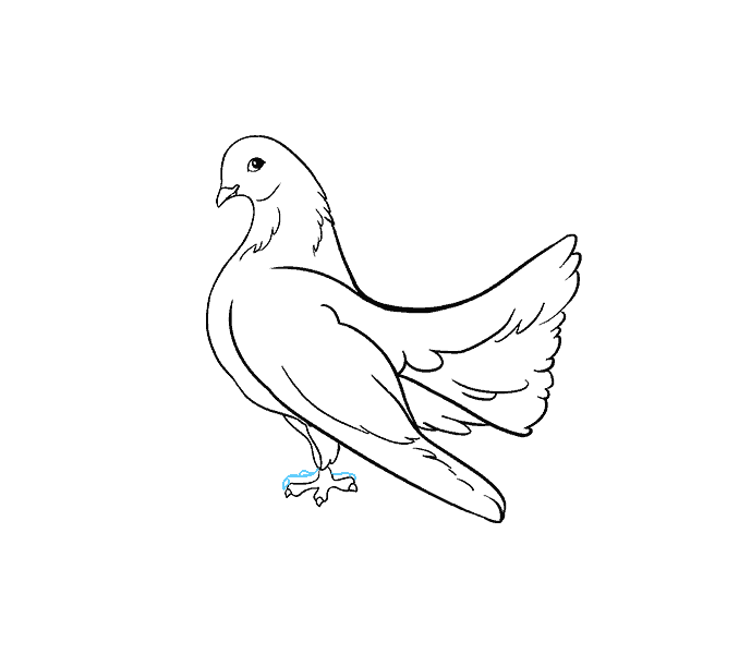 How to Draw Dove: Step 17