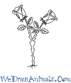 Drawing tutorial: How to Draw a Rose Tree