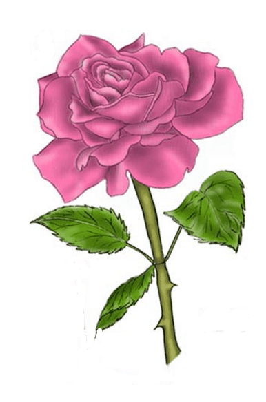 Drawing tutorial: How to Draw a Rose Using a Triangular Grid Lines