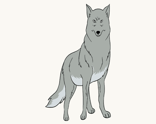 Drawing tutorial: How to Draw a Wolf