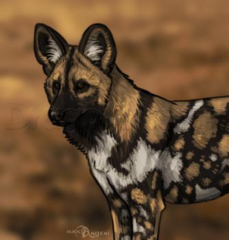 Drawing tutorial: How to Draw an African Dog