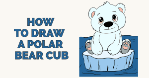 How to Draw a Polar Bear Cub: Featured image