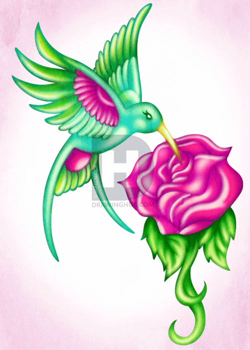 Drawing tutorial: How To Draw a Hummingbird with a Rose
