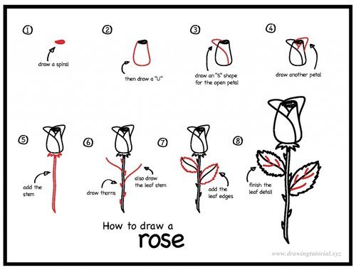 Drawing tutorial: How To Draw a Rose in Eight Easy Steps